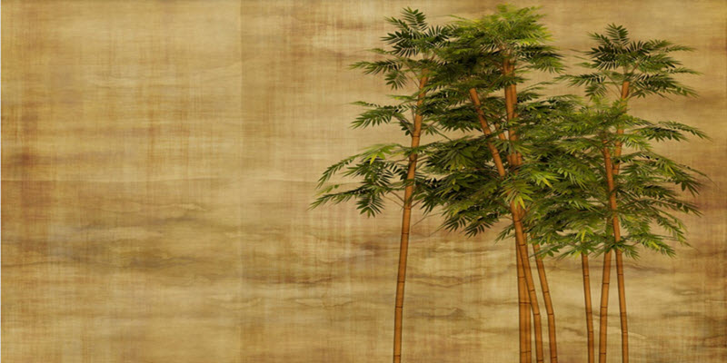 bambuk_piszan0.jpg (73.77 Kb)