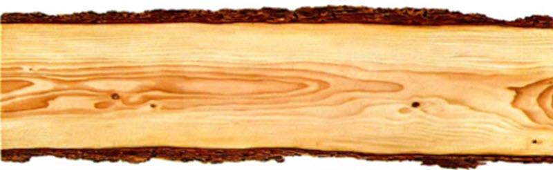 derevina1.jpg (37.72 Kb)